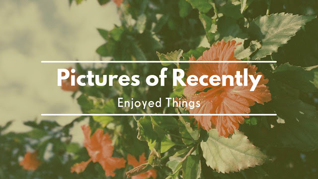 Pictures of Recently Enjoyed Things